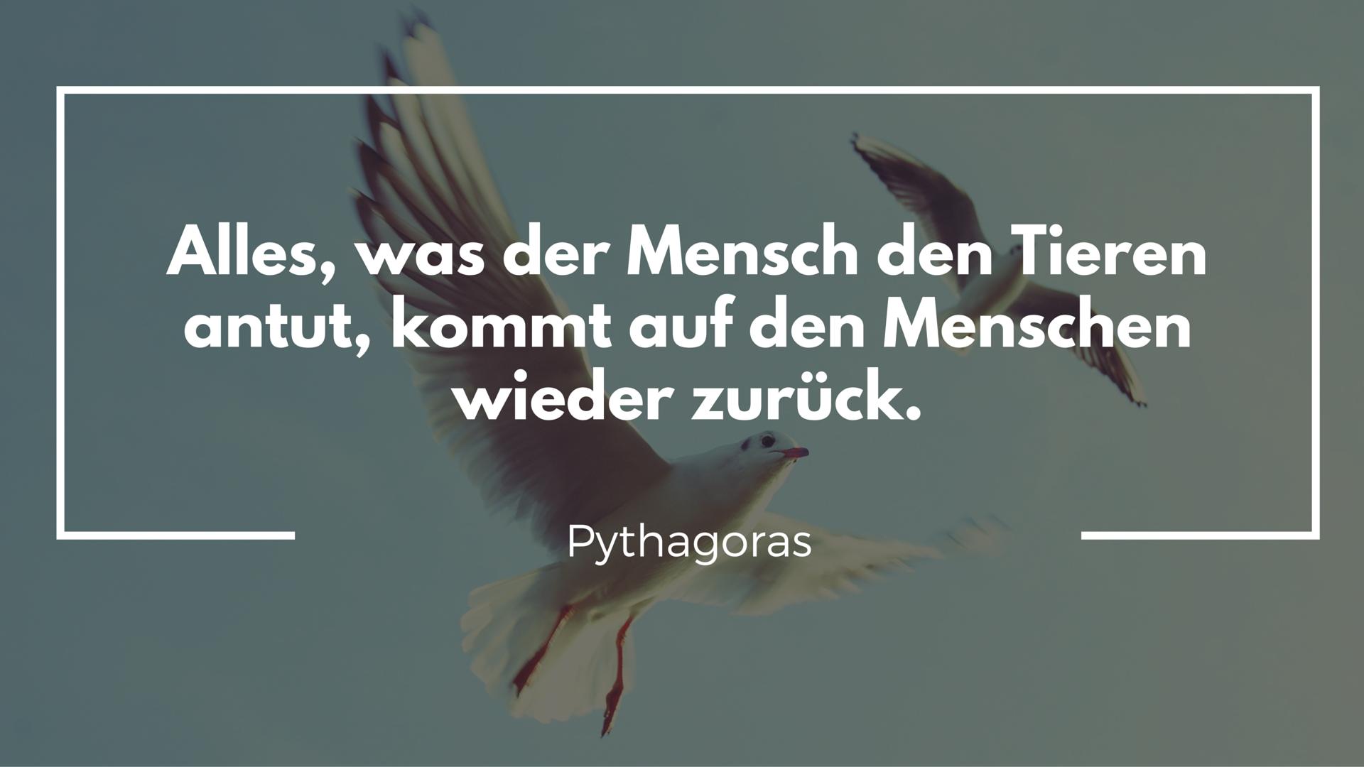 Zitat Pythagoras
